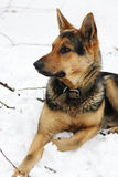 Portret van een hond op een witte achtergrond Royalty-vrije Stock Foto