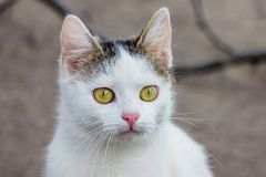 Portret van een jong wit kattenclose-up op een onscherpe background_ stock afbeelding