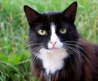 Portret van een kat Royalty-vrije Stock Fotografie