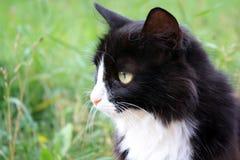 Portret van een kat Royalty-vrije Stock Afbeelding