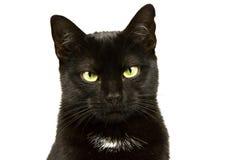 Portret van een kat 2 Royalty-vrije Stock Afbeeldingen