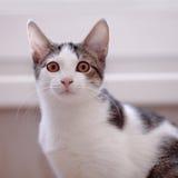 Portret van een kat Stock Afbeeldingen