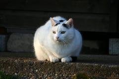 Portret van een kat Royalty-vrije Stock Afbeeldingen