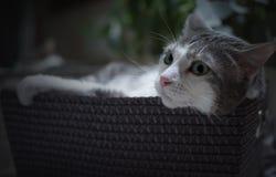 Portret van een Kat in de ontspannen mand Stock Fotografie