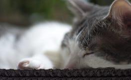 Portret van een Kat in de ontspannen mand Royalty-vrije Stock Fotografie