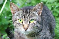 Portret van een kat die haar katjes beschermt royalty-vrije stock afbeelding