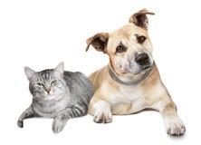 Portret van een kat en een hond Stock Afbeeldingen