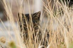 Portret van een kat in het droge gras Royalty-vrije Stock Fotografie