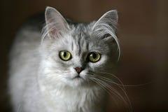 Portret van een katje Stock Foto