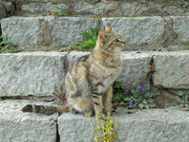 Portret van een Kattenzitting bij de Trap van de Archeologische Plaats van Delphi Royalty-vrije Stock Foto's