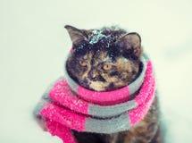 Portret van een klein katje die gebreide sjaal dragen royalty-vrije stock foto