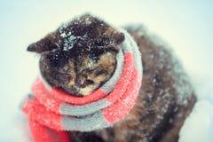 Portret van een klein katje die gebreide sjaal dragen stock afbeeldingen