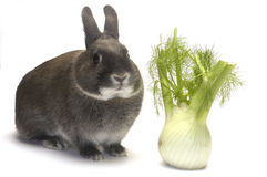 Portret van een konijn en zijn favoriete groenten royalty-vrije stock afbeeldingen