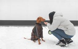 Portret van een meisje die in warme kleren met een hond in de winter op een achtergrond van een witte muur spelen royalty-vrije stock afbeeldingen