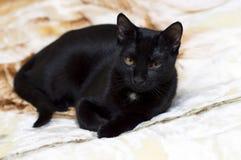 Portret van een mooie zwarte kat op een deken royalty-vrije stock afbeelding