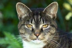 Portret van een oude kat Stock Foto