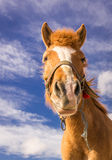 Portret van een paard Stock Afbeeldingen