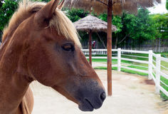 Portret van een paard in landbouwbedrijf Stock Afbeelding