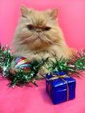 Portret van een Perzische kat Royalty-vrije Stock Foto
