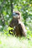 Portret van een roofzuchtige vogel tegen de achtergrond van groen royalty-vrije stock fotografie