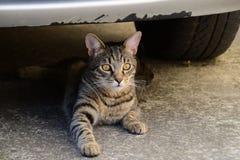 Portret van een tijgerkat met gele ogen die onder de auto, kat op de linkerkant van foto liggen Royalty-vrije Stock Foto
