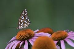 Portret van een vlinder stock foto's