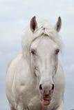 Portret van een wit paard stock afbeeldingen