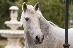 Portret van een wit paard in een tuin met een fontein als achtergrond stock foto