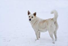 Portret van een witte hond stock afbeeldingen