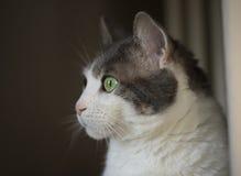 Portret van een witte kat met groene ogen Stock Fotografie