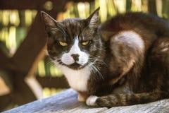 Portret van een zwart-witte kat buiten het zitten op houten Ta Stock Foto