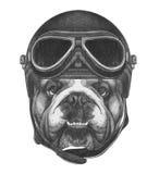 Portret van Engelse Buldog met Uitstekende Helm stock illustratie