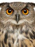 Portret van Europees-Aziatische Eagle-Uil, Bubo-bubo stock foto