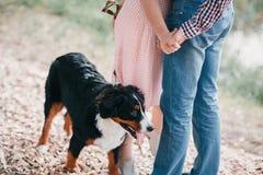 Portret van gelukkig jong paar die in modieuze kleren hond buiten voeden Herfst bos royalty-vrije stock afbeeldingen
