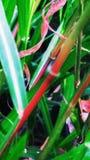 Portret van gras stock foto