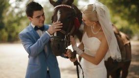 Portret van het charmante jonge paar van jonggehuwden teder wat betreft het bruine paard stock videobeelden