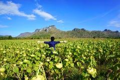 Portret van het jonge vrouw ontspannen met droog zonnebloemengebied royalty-vrije stock afbeelding