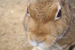 Portret van het konijn royalty-vrije stock fotografie