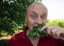 Portret van hogere veganist die mangelwortel en selderiebladeren in de zomertuin eten royalty-vrije stock afbeeldingen