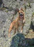 portret van hond op rotsen stock foto's