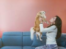 Portret van jonge Aziatische vrouw die haar hondchihuahua op bank thuis houden stock afbeeldingen