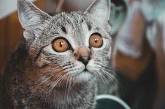 Portret van kat stock afbeeldingen
