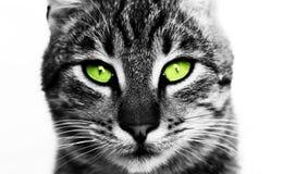 Portret van kat Stock Fotografie