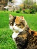 Portret van kat Stock Foto