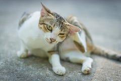 Portret van kat royalty-vrije stock afbeeldingen