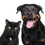 Portret van kat en hond op wit Stock Afbeeldingen