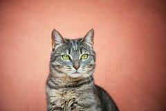 Portret van kat op roze achtergrond Royalty-vrije Stock Foto's