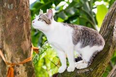 Portret van kattenzitting op de boom bij de zomer Stock Foto's
