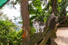 Portret van kattenzitting op de boom bij de zomerdag Stock Foto