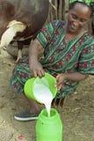 Portret van koe die Ethiopische vrouw melken Royalty-vrije Stock Afbeeldingen